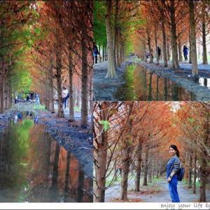 ▌遊記▌台中霧峰 落羽松森林,很有異國FU的秋冬蕭瑟之美! - 輕旅行