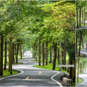 潭子》潭雅神綠園道(自行車道) 騎鐵馬遊台中 攝影人必拍S彎道 - 輕旅行