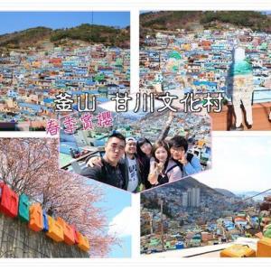 韓國自由行|釜山甘川文化村,童話般的村莊擁有繽紛色彩,搭配滿山綻放櫻花如詩如畫! - 輕旅行