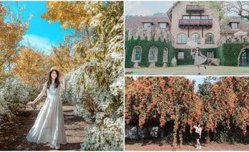 台中 推薦 8 個新社景點、假日就來探索、莊園古堡、絕美花園、特色餐廳